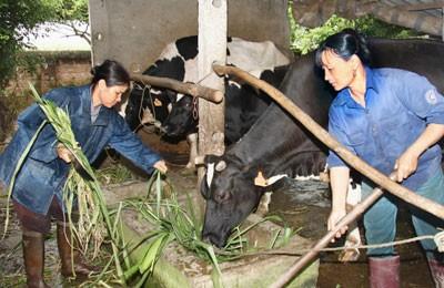 Ngành nông nghiệp làm gì để hội nhập? ảnh 1