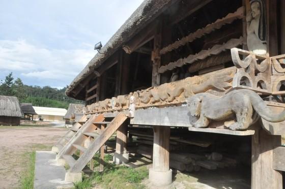 Rừng pơmu độc nhất vô nhị còn sót tại Việt Nam ảnh 2