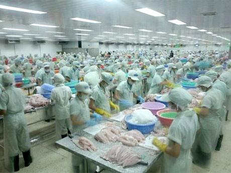 Xuất khẩu cá tra vào Trung Quốc tăng vọt ảnh 1