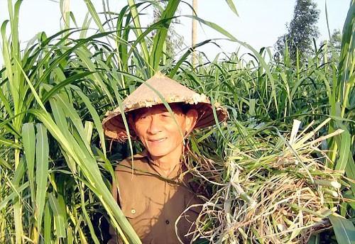 """Anh hùng Hồ Giáo - """"người chăn bò vĩ đại"""" về với cỏ xanh ảnh 1"""