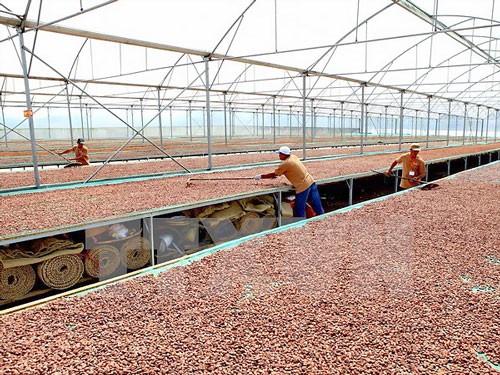 Đồng Nai liên kết Nhật Bản sản xuất chocolate ảnh 1