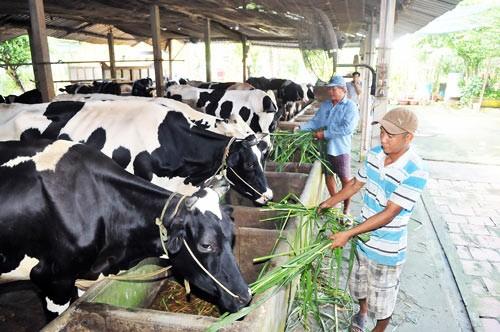 FTA, TPP với nông sản Việt - Động lực thay đổi ảnh 1