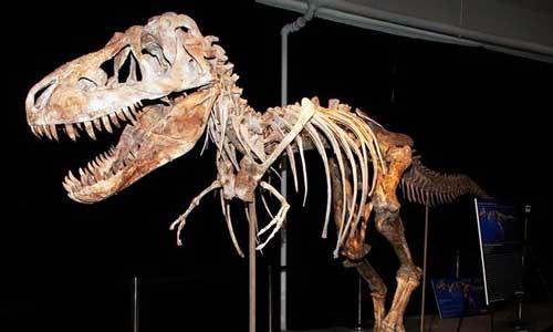 Nicolas Cage trả lại sọ khủng long hóa thạch ảnh 1
