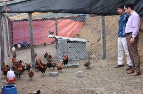 Trại gà rừng 1 triệu USD ảnh 1