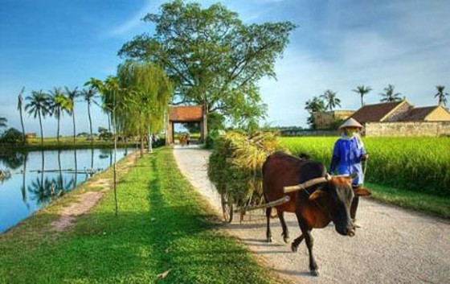 Đổi mới diện mạo nông thôn Hà Nội ảnh 1