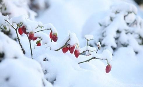 Chiều nay có khả năng mưa tuyết một số nơi ảnh 1