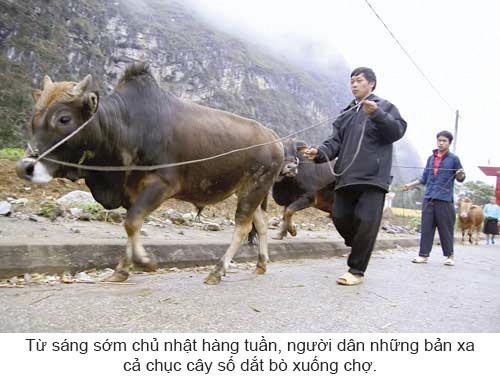 Độc đáo chợ bò Mèo Vạc ảnh 3