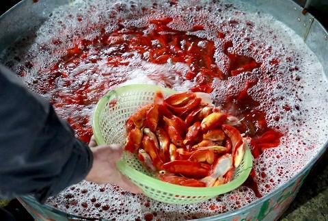 Cận cảnh chợ cá chép đỏ lớn nhất Hà Nội ảnh 2