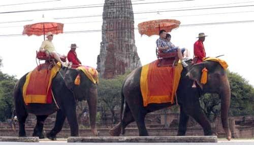 Thái Lan: voi giày chết du khách Anh ảnh 1