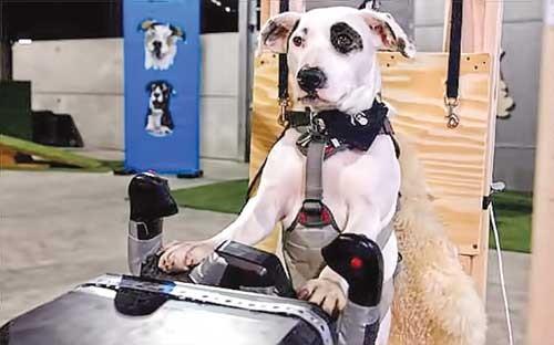 Dạy lái máy bay… cho chó ảnh 1