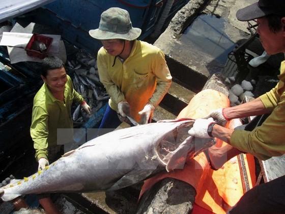 Sản lượng thủy sản tăng, nghề cá tra vẫn lỗ ảnh 1