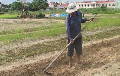 Đề xuất chuyển đổi mục đích 400.000ha đất lúa ảnh 1