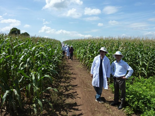 Nhiều ưu đãi vốn FDI vào nông nghiệp ảnh 1