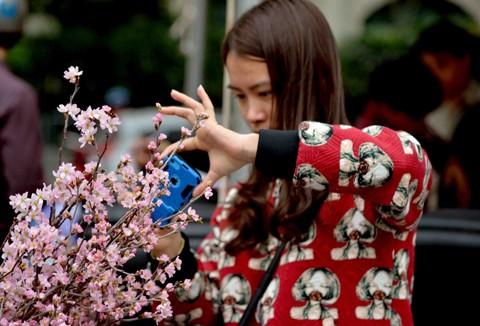 Hà Nội: Cận cảnh ngắm hoa anh đào Nhật Bản ảnh 5