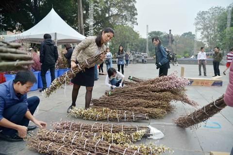 Hà Nội: Cận cảnh ngắm hoa anh đào Nhật Bản ảnh 4
