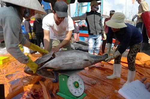 Cá ngừ đại dương VN đánh giá cao ở Nhật ảnh 1