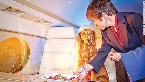 Dịch vụ bay cho thú cưng ảnh 1