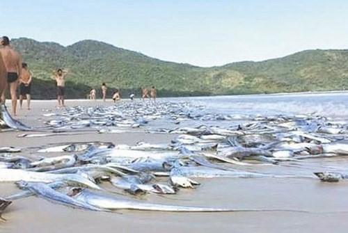 Bộ TN-MT bất ngờ hủy họp báo nguyên nhân cá chết ảnh 1