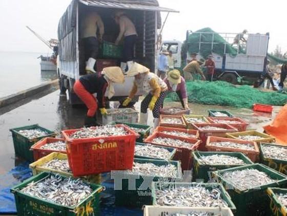 Kiểm soát thủy sản xuất khẩu từ 4 tỉnh có cá chết ảnh 1