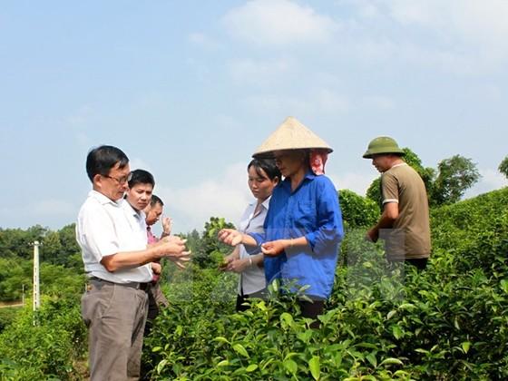 Thu hút đầu tư tư nhân phát triển nông nghiệp ảnh 1