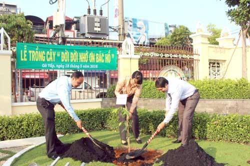 Gò Vấp đã trồng lại 11 cây vấp ảnh 1