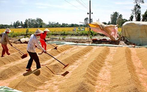 Gạo Việt: Hãy loại bỏ rào cản chính sách ảnh 1