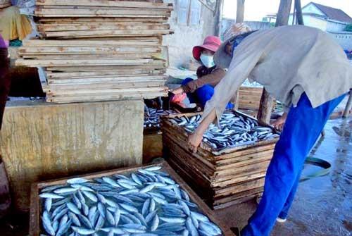 Phát hiện chất cực độc trong cá nục đông lạnh ảnh 1