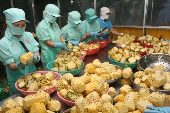 Xuất khẩu nông sản 6 tháng hơn 15 tỷ USD ảnh 1