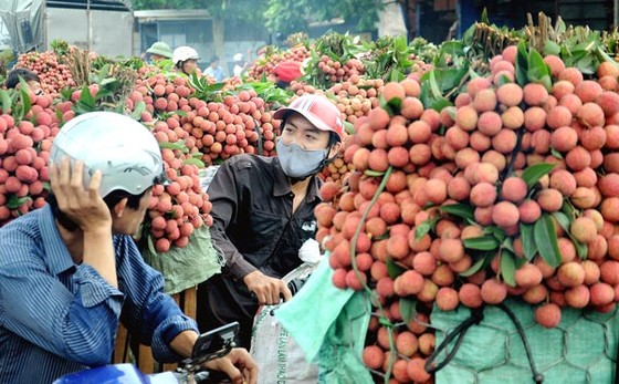 Điểm sáng trong xuất khẩu nông sản ảnh 1