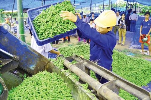 Phổ biến mô hình HTX nông nghiệp hiệu quả ảnh 1