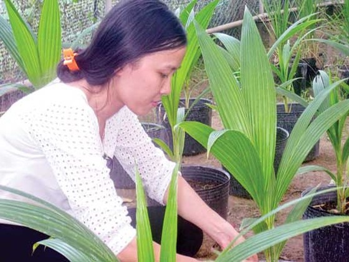 Tìm hướng phát triển nông nghiệp bền vững ảnh 1