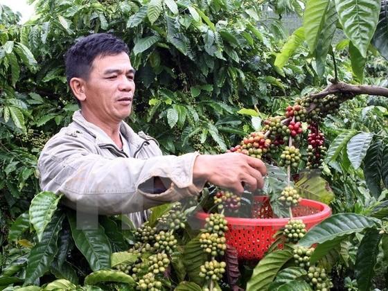 Càphê Việt tìm kiếm cơ hội tại thị trường Anh ảnh 1
