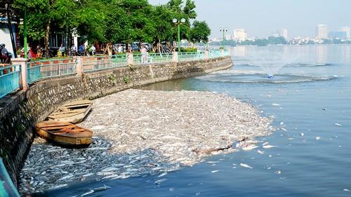 Bơm ô xy, hóa chất ngăn cá chết tại Hồ Tây ảnh 1