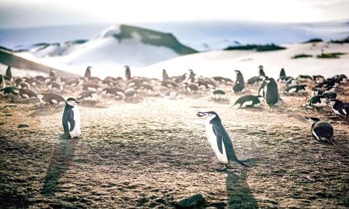 Khu bảo tồn biển lớn nhất thế giới ảnh 1