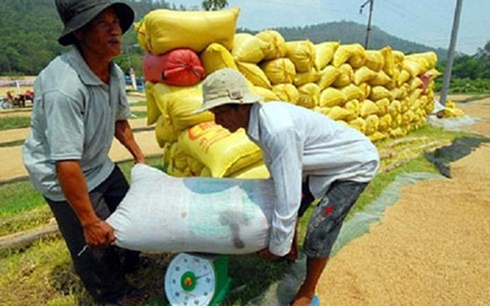 Lúa gạo: Năm 2016 u ám và cảnh báo tương lai ảnh 1