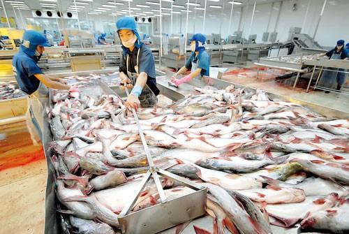 Xuất khẩu cá tra: Tìm giải pháp bền vững ảnh 1
