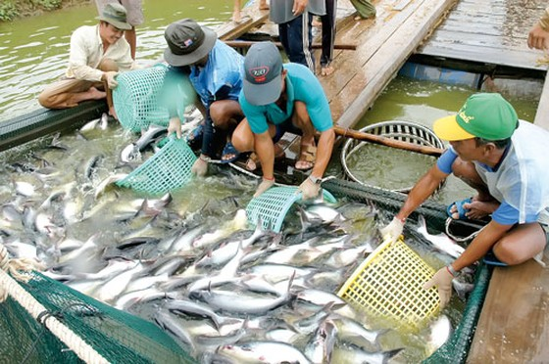 Thủy sản cần hỗ trợ từ chính sách ảnh 1