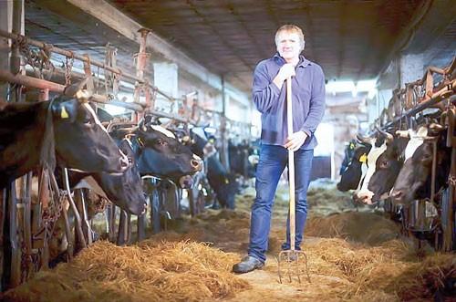 Phân hóa bò sữa Đức ảnh 1