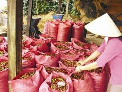 IFC, Mondelēz tập huấn 5.000 nông dân trồng cà phê ảnh 1