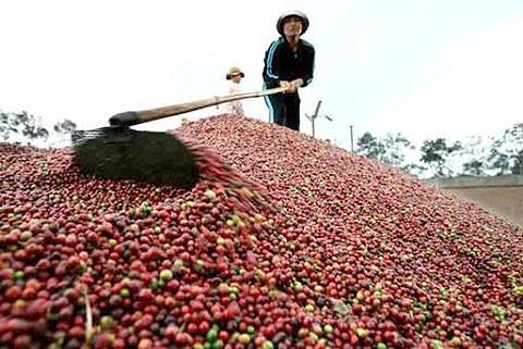 Trung Quốc hủy nhãn hiệu cà phê Buôn Ma Thuột ảnh 1