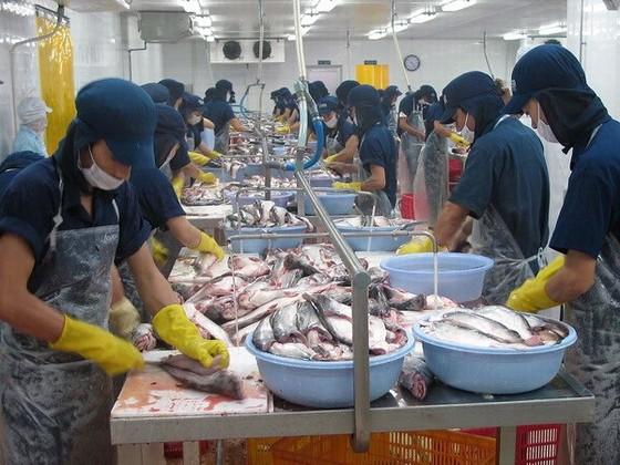 Sẽ có Trung tâm phân phối cá tra tại EU ảnh 1