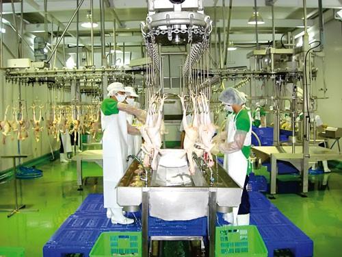 Dofico hướng đầu tư vào công nghiệp thực phẩm ảnh 1