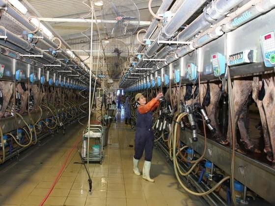 Sữa Việt Nam đi ngược xu thế thế giới ảnh 1