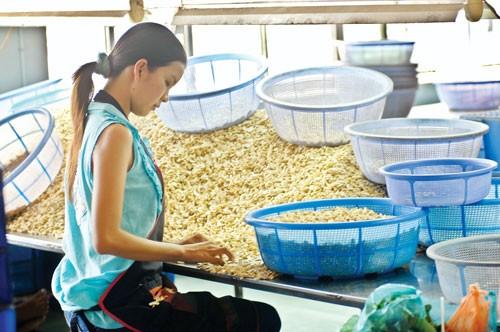 Tập đoàn Kroger: Sang Việt Nam trực tiếp đặt hàng ảnh 1