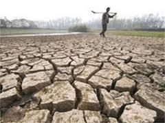 Trung Quốc: Sản lượng gạo giảm vì hạn hán ảnh 1