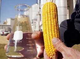 Nhiên liệu sinh học đẩy giá lương thực tăng ảnh 1