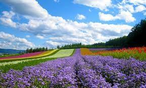 Ngày xuân tản mạn về hoa ảnh 1