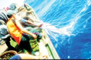 Đánh thức tiềm năng kinh tế biển ảnh 1