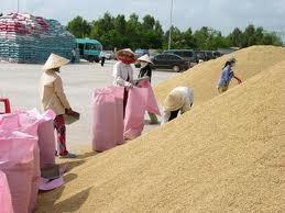 ĐBSCL: Giá lúa gạo tăng trở lại ảnh 1