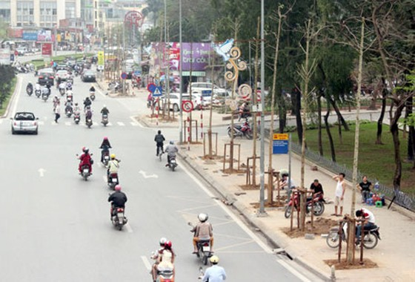 Kiến nghị trồng lại cây khác trên đường Nguyễn Chí Thanh ảnh 1